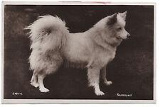 SAMOYED OLD VINTAGE 1930'S REAL PHOTO POSTCARD