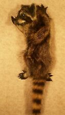 taxidermy baby raccoon stuffed animal gift present cabin decor new wall mount 8