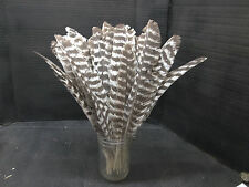 50 plus Montana Merriam Wild Turkey Feathers, great for crafting and decorating
