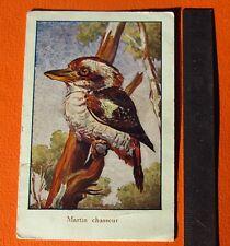 CHROMO 1933 BON POINT ECOLE OISEAU MARTIN CHASSEUR ANIMAUX