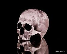 Human female skull replica - REAL SIZE, BRAND NEW (No.1)