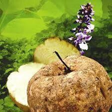 250 g 100% Pure Pueraria Mirifica Herb in Powder Extract (premium grade) WKK
