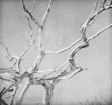 1930/63 Vintage 11x14 CHESTNUT Tree Branch Abstract Photo Art By EDWARD STEICHEN