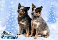 Australian Cattle Dog A6 Christmas Card Design XAC-4 by paws2print