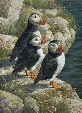 """Fisherman's Wharf - Puffins"" Carl Brenders Limited Edition Giclee Canvas"