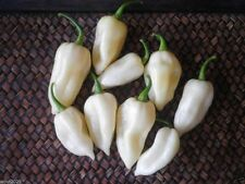 White Ghost Pepper Also Know As White Bhut Jolokia Pepper Seeds-10 Seeds