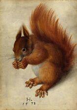 Hans Hoffmann after Albrecht Durer Red Squirrel Fine Art Real Canvas Print New