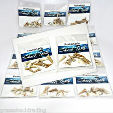 WHOLESALE 12 Piece Lots Fossil Shark Teeth Display Packs Asst Sharks Teeth