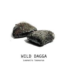 WILD DAGGA 5 g Leonotis leonurus PREMIUM RESIN EXTRACT NO HEAT RELAXING