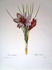 P.J. Redoute # 26 Crocus Sativus Lanlois vintage print