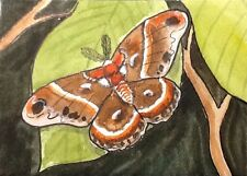 ACEO Original By Kit Lundwall Watercolor Ink Cecropia Moth Wildlife