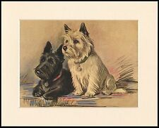 CAIRN TERRIER SCOTTISH TERRIER LOVELY LITTLE DOG PRINT READY MOUNTED