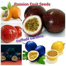 10 Seeds Mixed Passion-fruit Seeds Rare Collection Limited Offer