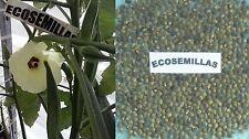 Okra, quimbombo, gombo, PROPIEDADES CURATIVAS, 60 semillas ECOLÓGICAS