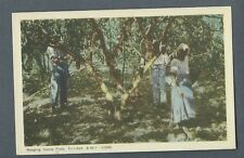 Vintage Postcard Reaping Cocoa Pods, Trinidad, B.W.I.