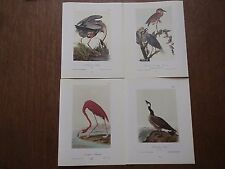 Lot of 40 Vintage Audubon Bird Prints - Ibis Egret Heron Flamingo  Free Shipping