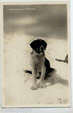Chien au Grand St Bernard Dog Early Real Photo Vintage PC Circa 1920