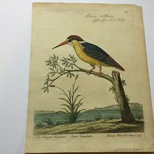 """Eleazar Albin Hand Colored Engraving """"The Bengalll Kingfisher"""""""