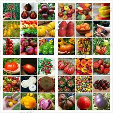 Tasty 200 Mix Tomato Seeds Container/Ground Plant Non Gmo Heirloom Vegetable 1