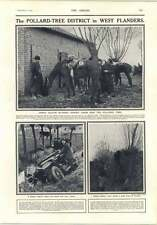 1914 Pollard Tree District West Flanders Tending Officers Horses