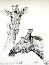 "1973 RETICULATED GIRAFFE B/W Framable ART PRINT by Ray HARM 11""x15"" L@@K"