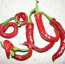 "Aji Cacho de Cabra,10 Seeds~Use to make ""Merkén"" A Popular Chilean Spice Blend !"