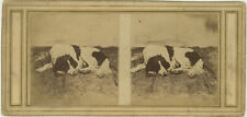 Photo Stéréo Papier Salé Salt Print Chien d'Arrêt Dog Animal Vers 1850