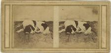 Photo Stéréo Papier Salé Salt Print Chien d'Arrêt Dog Animal Vers 1850