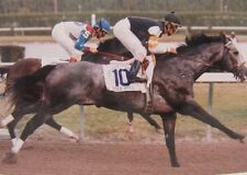 HOLY BULL vs CIGAR 8X10 PHOTO HORSE RACING PICTURE JOCKEY