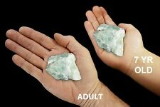 "Green Fluorite 1.5"" 2-3 Oz Healing Crystals and Stones Heart Chakra Metaphysical"
