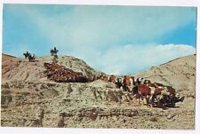 THE OLD WEST IS STILL ALIVE - CATTLE AND COWBOYS - POSTCARD UNUSED # 75709-B