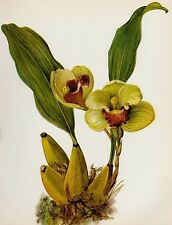 Botanical ORCHID Print Vintage Flower Print Gallery Wall Art Cottage Decor 1925