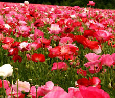 POPPY CASCADE POCKET Wildflower Mix - 60,000 Bulk Seeds