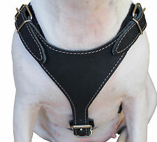 """Genuine Leather Dog Walking Harness 25""""-30"""" chest size Bull Terrier Boxer"""