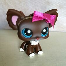 Littlest Pet Shop Chihuahua Brown & White w Blue eyes #219 - nice shape - 9 pics