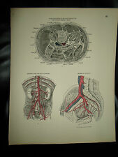 ARTERIES+VEINS+LYMPHATICS #65 Old Print From Descriptive Atlas of Anatomy 1880