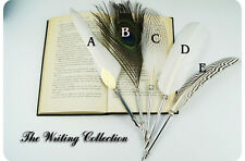 White Antique Big Size Dip Pen Turkey/ Goose /Peacock/ Owl Quill Feather