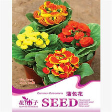 FD1588 Calceolaria Seed Common Calceolaria Garden Flower Seed ~1 Pack 30 Seed~ A