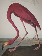 Audubon - American Flamingo - Birds of America - Ariel Press FOLIO