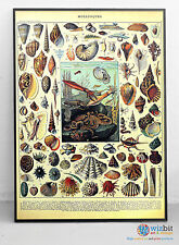 "Molluscs Poster - ""Mollusques"" by Adolphe Millot - Digitally restored art"