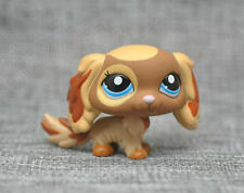 Littlest Pet Shop Brown Cream Puppy King Charles Spaniel Dog Blue Eyes LPS
