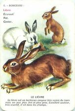 Lièvre Lepre HARE HASE PLAYING CARD CARTE A JOUER OLD ANCIEN