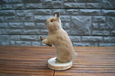 beautiful rabbit with cone - taxidermy