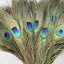 10Pcs Nice Fashion Peacock Tail Feathers Crafts DIY Accessories Home Decoration