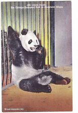 GIANT PANDA---BROOKFIELD ZOO---CHICAGO  ILLINOIS---POSTCARD