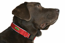 Premium Dog Collar with Soft Neoprene padding in Blue, Red, Green, Pink, Black
