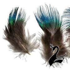 Feather Peacock Plumage - Blue (Pack of 20) - Craft Millinery Fly Fishing
