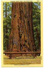 B3105 General Grant Tree Big Tree Park Santa Cruz CA Redwood 1940 Teich Linen PC