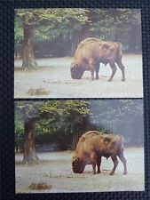 Bison bisonte europeo Buffalo 2 POSTCARDS different inscription backside c2325