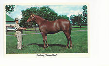 Kentucky Thoroughbred Yearling Ready For Sale  KY   Unused Chrome Postcard 963